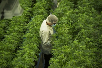 Les actionnaires de Supreme Cannabis approuvent l'offre de Canopy Growth)