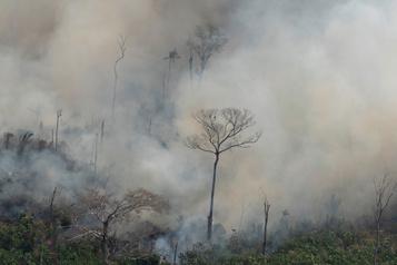 Amazonie: Bolsonaro autorise l'envoi de l'armée, Trump offre son aide