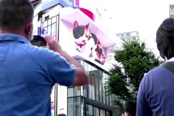 Un chat géant en 3D sur un panneau publicitaire de Tokyo)