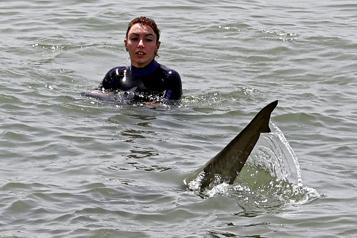 En Israël, des requins affluent sur la côte, au bonheur des baigneurs)