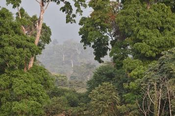 Les forêts tropicales pourraient relâcher du carbone avec le réchauffement)