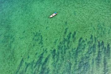 Un banc de dugongs aperçu près d'une île thaïlandaise)