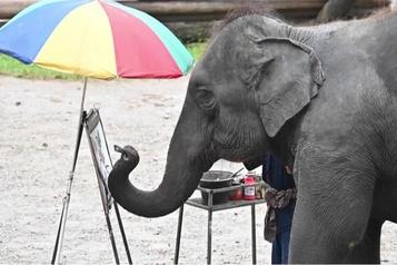 Le sombre envers du décor des «éléphants à touristes»