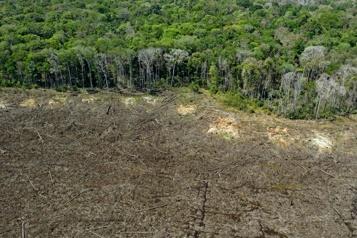 Brésil Près de 8500km2 de forêt amazonienne déboisés en 2020)