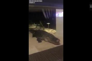 Floride Un alligator devant la porte d'entrée)