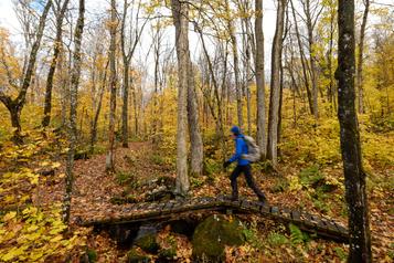 Photoreportage: promenons-nous dans les bois)