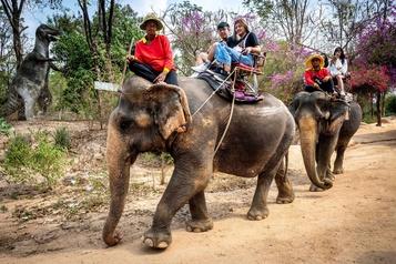 «Les éléphants à touristes» en détresse en Thaïlande)