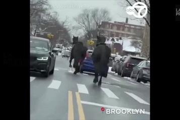 Deux chevaux de la police de New York en cavale)