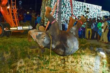 Un sauvetage éléphantesque en Inde)