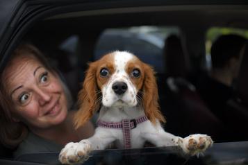 Votre chien pourrait être plus vieux que vous le pensiez)