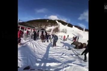 Incroyable mais vrai: un orignal surprend des skieurs en Suède