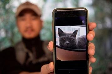 Chine: un détective pour les chats perdus