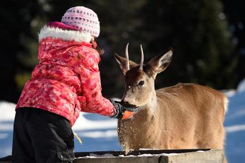Carnaval hivernal au parc Oméga
