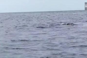 Des dauphins perturbent la finale du championnat de France de jet ski