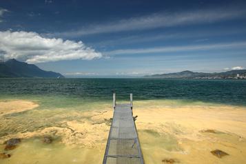 Des nappes de pollen dans le lac Léman)