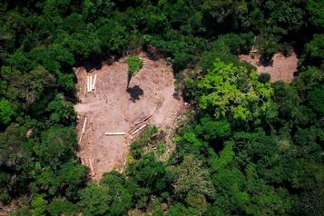 Déforestation: un ex-responsable brésilien appelle les scientifiques à ne pas se taire