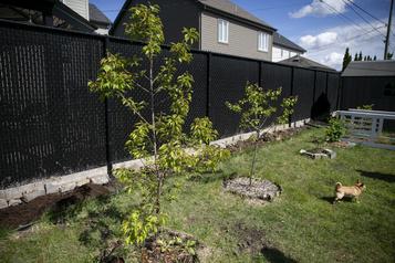 Des arbres à bas prix pour verdir Montréal)