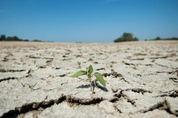 Réchauffement planétaire Les pertes de récoltes liées aux sécheresses en Europe ont triplé en 50ans)