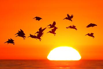 L'Amérique du Nord a perdu trois milliards d'oiseaux depuis 1970