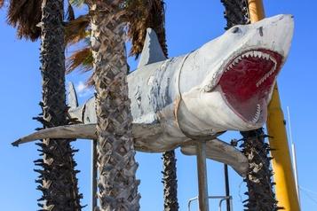 Futur musée des Oscars Le requin de Jaws prêt à terroriser les visiteurs)