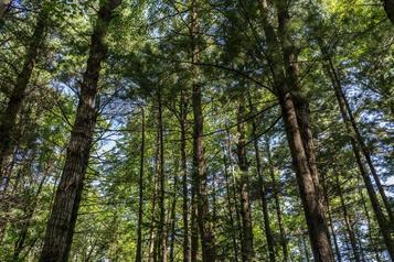 Planter des milliards d'arbres aurait peu d'effet sur le réchauffement climatique