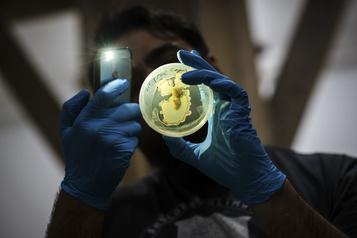 Pandémies?: une perspective multidisciplinaire et internationale La menace du bioterrorisme)