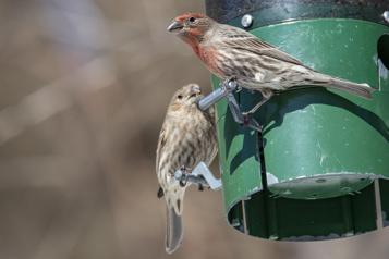 Des balades pour observer les oiseaux)