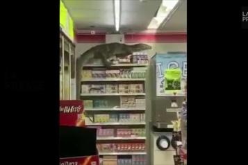 Un varan fait irruption dans un dépanneur en Thaïlande)