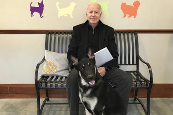Joe Biden se fracture le pied en jouant avec son chien)
