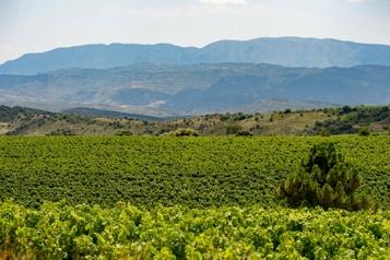 Changements climatiques Le vin espagnol tente de s'adapter)