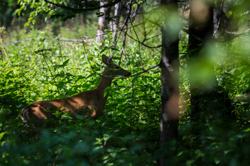 Aires protégées: Québec veut plus de souplesse sur la protection