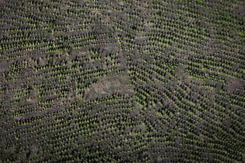 Deux milliards d'arbres Une infime fraction des arbres en terre en 2021)