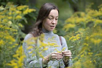 Plantes comestibles et médicinales Manger la forêt)