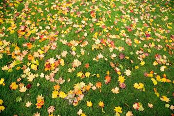 Faut-il ramasser les feuilles?