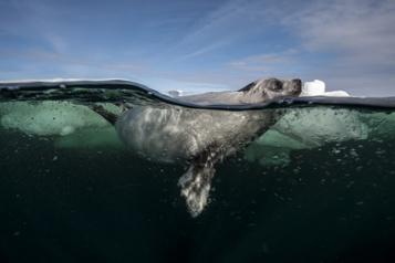 Sous les glaces Éloize se lance dans les expos immersives)