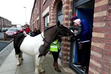 COVID-19 Des poneys pour égayer le confinement à Liverpool )