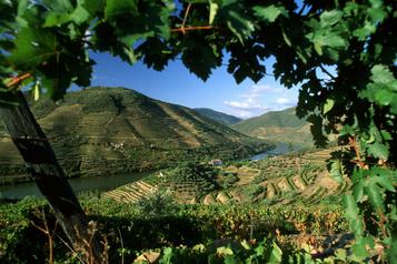 Quel pays n'a pas vu sa production viticole chuter?