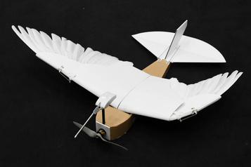 Un robot à plumes