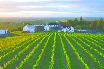 Coteau Rougemont se fait voler pour 5000$ de raisins)
