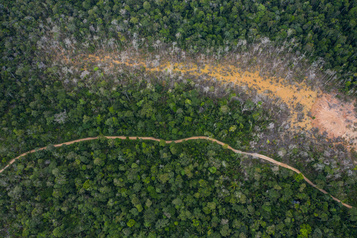 Le Pérou va relancer ses concessions forestières en Amazonie
