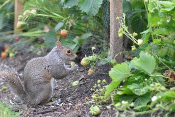 Astuces de jardinage: quand lesanimaux s'invitent dans le jardin