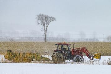 Des récoltes dans la neige