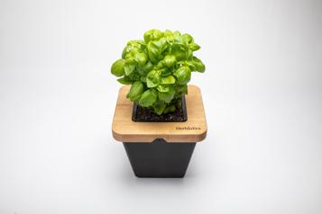 La bonne idée Des végétaux automatisés)