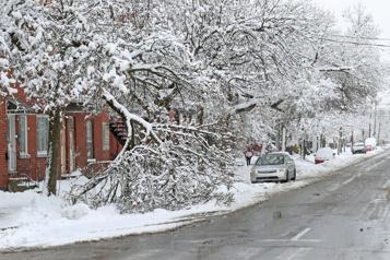 Première tempête de neige de l'année Branches d'arbres cassées, trottoirs enneigés)