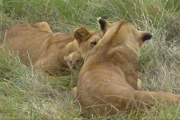 L'essor du safari virtuel en Afrique du Sud)