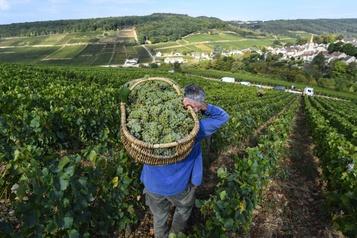 Les vins de Bourgogne résistent grâce au boom des ventes)
