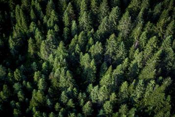 Coupes autour de la rivière Péribonka  «Une claque dans la face», pour des défenseurs de l'environnement )