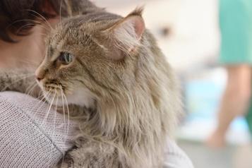 Cinq choses que les propriétaires d'animaux doivent savoir