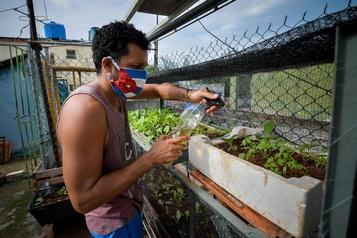 Cuba: un potager à la maison, une nécessité)