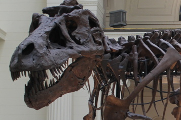 Combien dedinosaures ont vécu sur la Terre?)